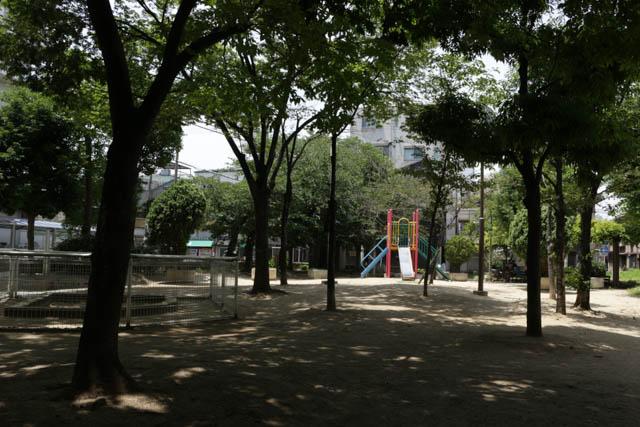 ささやかな「自然」だった自宅前の公園 木々の樹形は40年前と変わらない