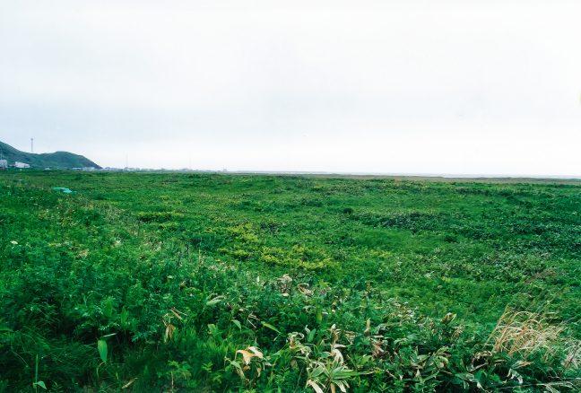 抜海集落と抜海漁港を遠望する