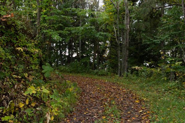 落ち葉が堆積して路面は隠れているが、道は比較的明瞭