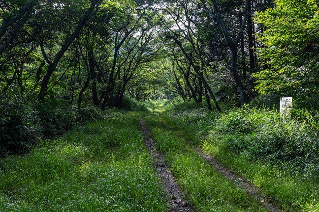 駅の南側には、青山高原へのハイキングコースとなった単線時代の廃線跡が続いている