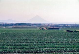 枕崎郊外から望む開聞岳(鹿児島県:1997年12月)
