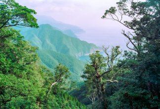大隅半島・大中尾林道(鹿児島県:1997年12月)