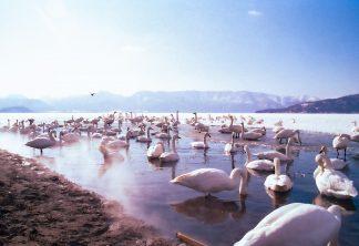 屈斜路湖砂湯(北海道:1998年2月)