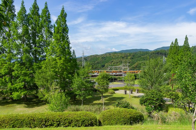 四季のさとの木立の間から、東青山駅を通過するビスタカーを眺める