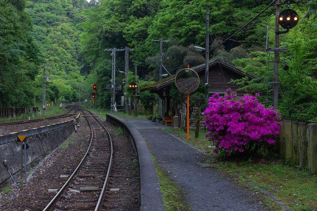 駅のホームに植えられたツツジが印象的