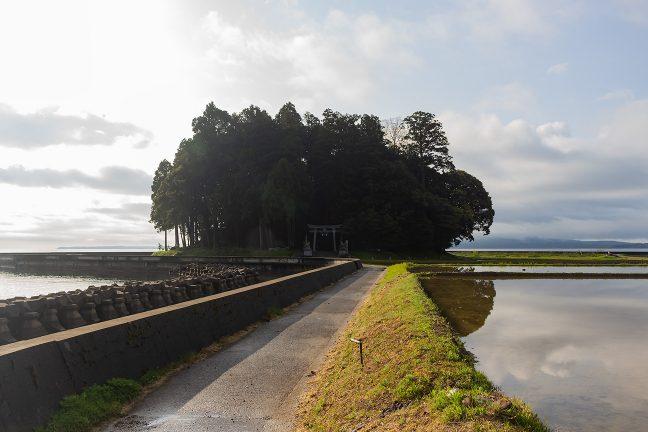 七尾湾に突出した鹿島神社の社叢を見に行く