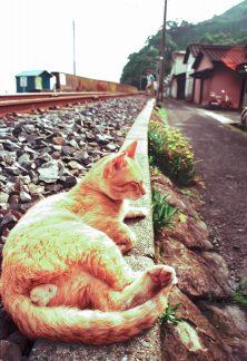 旧JR鹿児島本線・上田浦駅付近(熊本県:1999年8月)
