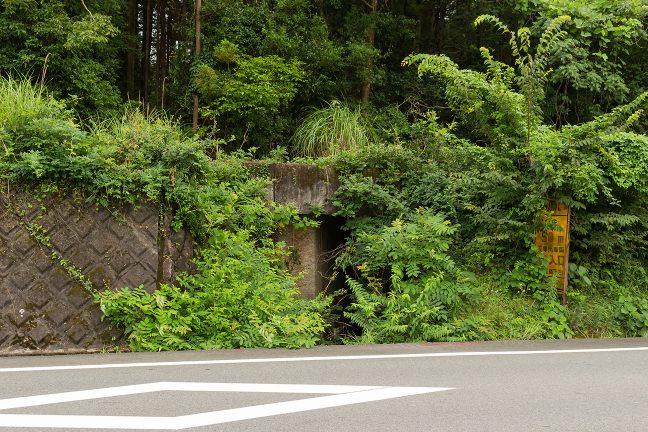 草生したコンクリートの構造物が見え隠れする