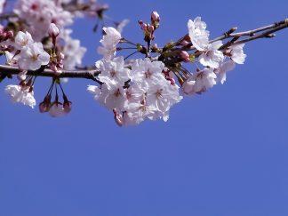 新宮市・春暖(和歌山県:2003年3月)