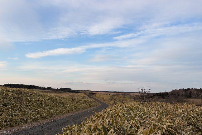 初田牛駅周辺の牧草地の風景