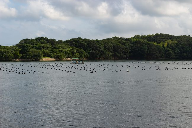 湾内の随所に養殖の部位が浮かんでいる