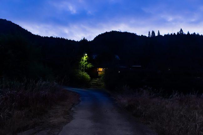 駅の照明が樹木の合間に浮かび上がる