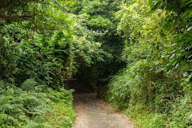 灯台への道は軽トラで何とか通過できる程度の歩道のみ