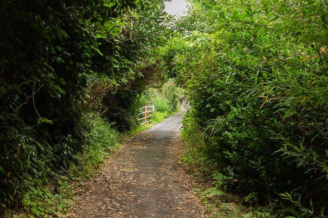 温帯性の藪に囲まれた狭い歩道を辿って岬にアクセスする