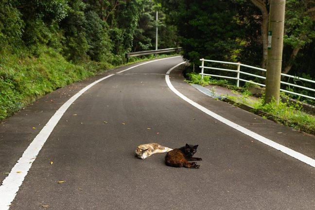 車も通らない車道は猫様の昼寝場所